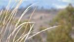 http://www.zemljiste.mps.hr/novosti/vijesti/agencija-za-poljoprivredno-zemlji%C5%A1te-otvorila-podru%C5%BEnicu-u-pazinu/
